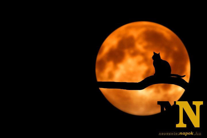 Fekete macska a halloween jelképei között