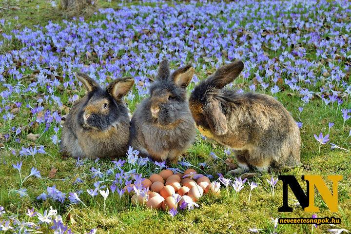 Húsvéti nyúl, húsvéti nyuszik